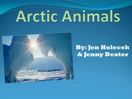 By: Jen Holecek & Jenny Dexter. ARCTIC ANIMALS IN ACTION…