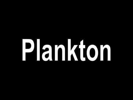What is plankton?