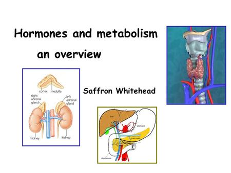 Hormones and metabolism an overview Saffron Whitehead.