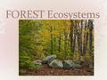 FOREST Ecosystems. Description PLANTS PLANT Adaptations Wildflowers grow on forest floor early in the spring before trees leaf-out and shade the forest.