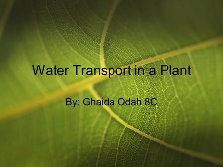 Water Transport in a Plant By: Ghaida Odah 8C. Introduction We all know that plants need water to grow and live. What we might not know is how that water.