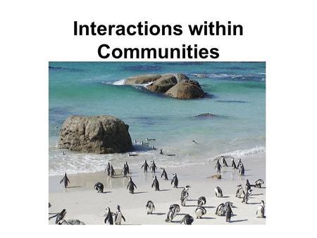 Interactions within Communities. A community consists of all populations of different species that interact together in a given ecosystem. Some organisms.