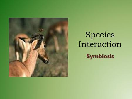"Species Interaction Symbiosis. Symbiosis Means ""living together"" Interaction between two species where at least one benefits – Some organisms are permanently."