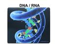 DNA / RNA. DNA Deoxyribonucleic Acid Located in the nucleus / never leaves the nucleus Makes up the chromosomes 4 Nitrogenous Bases: –A = Adenine –C.