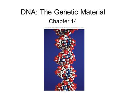 DNA: The Genetic Material Chapter 14. Frederick Griffith – 1928 Studied Streptococcus pneumoniae, a pathogenic bacterium causing pneumonia 2 strains of.