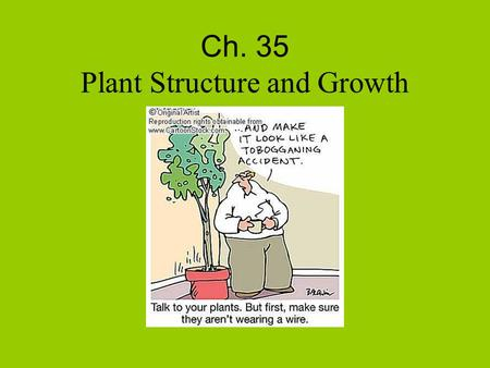 Ch. 35 Plant Structure and Growth. I. Angiosperm Body A. Two types 1. Monocotyledon (monocot) a. One cotyledon, veins in leaf parallel, vascular bundles.