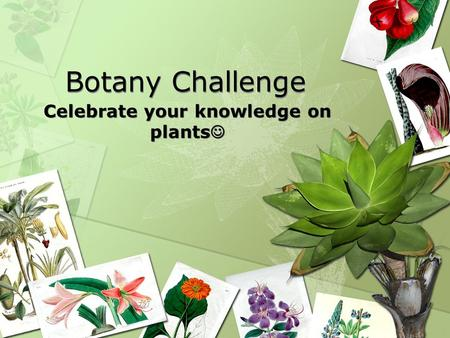 Botany Challenge Celebrate your knowledge on plants.