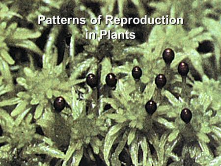 Patterns of Reproduction in Plants. Purely Organic In The News.