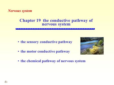 -1- Chapter 19 the conductive pathway of nervous system Nervous system the sensory conductive pathway the motor conductive pathway the chemical pathway.