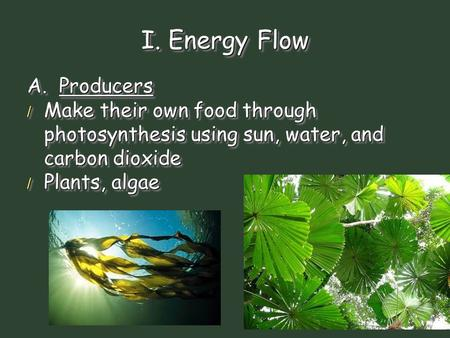 I. Energy Flow A. Producers / Make their own food through photosynthesis using sun, water, and carbon dioxide / Plants, algae A. Producers / Make their.