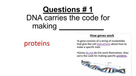 Questions # 1 DNA carries the code for making proteins.