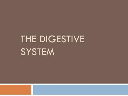 THE DIGESTIVE SYSTEM. Digestive System  Function: Breaks down food into simpler substances.  Digestions begins in the mouth. There food is chewed and.