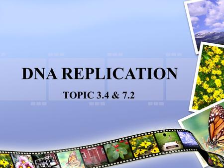 DNA REPLICATION TOPIC 3.4 & 7.2. Assessment Statements 3.4.1 Explain DNA replication in terms of unwinding the double helix and separation of the strands.