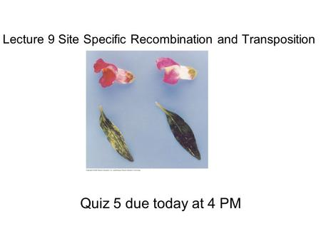 Lecture 9 Site Specific Recombination and Transposition Quiz 5 due today at 4 PM.