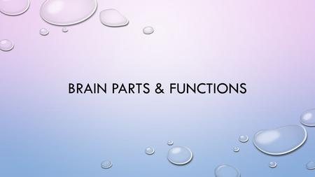 BRAIN PARTS & FUNCTIONS. BRAIN STRUCTURES & FUNCTIONS.