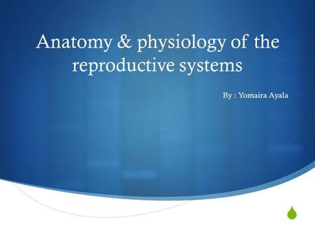  Anatomy & physiology of the reproductive systems By : Yomaira Ayala.