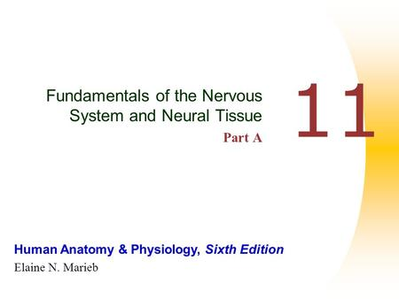 Human Anatomy & Physiology, Sixth Edition Elaine N. Marieb 11 Fundamentals of the Nervous System and Neural Tissue Part A.