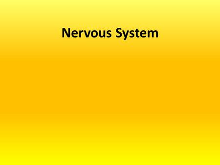 Nervous System. The Nervous System Two main systems: –Central Nervous System (CNS) The body's decision maker –Peripheral Nervous System (PNS) 1)Gathers.