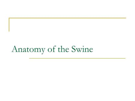 Anatomy of the Swine. Today we will be learning about… Anatomy of the swine, that is what makes them up. We will be taking a look at more valuable parts,