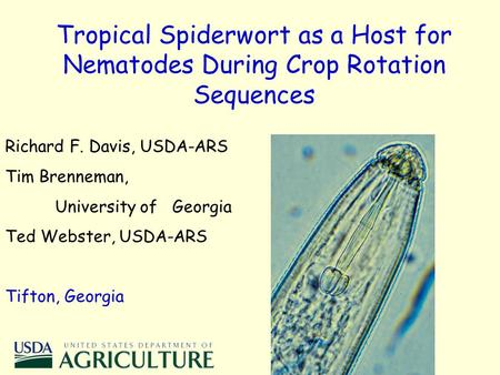 Tropical Spiderwort as a Host for Nematodes During Crop Rotation Sequences Richard F. Davis, USDA-ARS Tim Brenneman, University of Georgia Ted Webster,