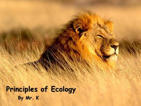 Principles of Ecology By Mr. K. Energy in an Ecosystem  __________________ 2.2 Flow of Energy in an Ecosystem Principles of Ecology  Organism that collects.