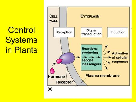 Control Systems in Plants. Plant Hormones What is a Plant hormone? Compound produced by one part of an organism that is translocated to other parts where.