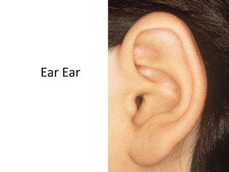 Ear. Inside an Ear Ear Camera Causes of hearing loss Disease – Some illnesses affect the ear and can cause hearing loss. Drugs – Some medicines can.