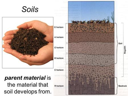 Soils parent material is the material that soil develops from.