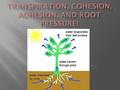 Cohesion and Adhesion Root pressure  Transpiration: evaporation from the leaves creates a pull that draws water up through the stem.