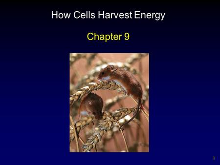 1 How Cells Harvest Energy Chapter 9. 2 Outline Cellular Energy Harvest Cellular Respiration – Glycolysis – Oxidation of Pyruvate – Krebs Cycle – Electron.