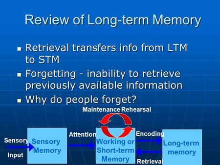 Review of Long-term Memory Long-term memory Working or Short-term Memory Sensory Input Sensory Memory Attention Encoding Retrieval Maintenance Rehearsal.