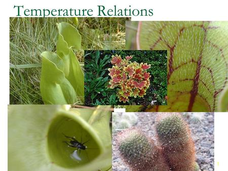 1 1 Temperature Relations Chapter 4. 2 2 Outline Microclimates Aquatic Temperatures Temperature and Animal Performance Extreme Temperature and Photosynthesis.