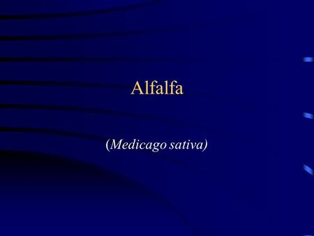 "Alfalfa (Medicago sativa). Introduction Known as the ""queen of forages"" Alfalfa(Medicago L.), also called Lucerne Originated near Iran First introduced."