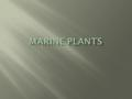  Approximately 200 species of marine plants  Salinity greatest challenge  Exposure to salt water dehydrates most plants  Adaptations for marine plants.