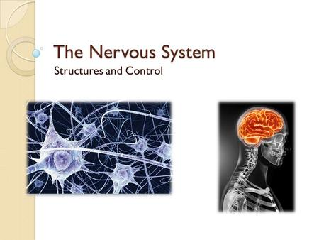 The Nervous System Structures and Control. Central Nervous System Already know it consists of the brain and spinal cord Both are bathed in the cerebrospinal.