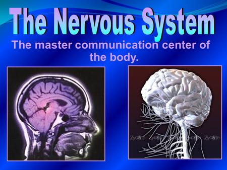 The master communication center of the body.. 3 Main Functions:  Monitor all information about changes occurring both inside and outside the body. 