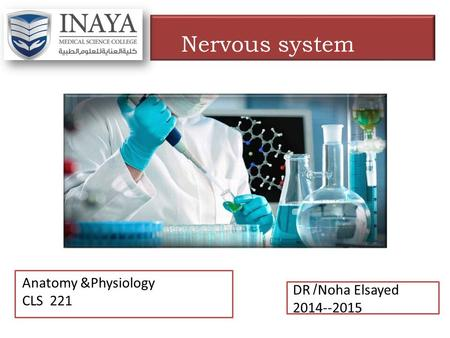 DR /Noha Elsayed 2014--2015 Anatomy &Physiology CLS 221 Nervous system.