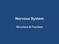 Nervous System Structure & Function. Nervous System Master control & communication system for the body Works with other systems to maintain homeostasis.