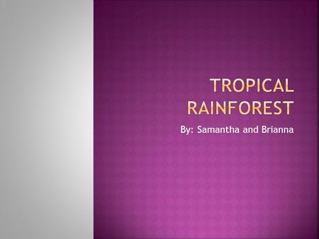 By: Samantha and Brianna.  The tropical rainforest has layers in the canopy.  the trees are 100-120 feet  Vegetation can become dense at ground level.
