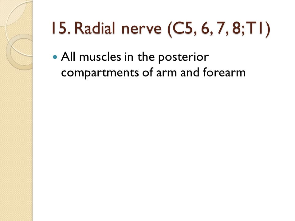 16. Axillary nerve (C5, 6) Deltoid, teres minor