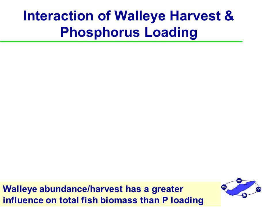 Interaction of Walleye Harvest & Phosphorus Loading Walleye abundance/harvest has a greater influence on total fish biomass than P loading P2 P3 P4 P5 W1 W2 W3 W4 W5 0.0 1.0 2.0 3.0 4.0 5.0 6.0 Total Fish Biomass P Loading Walleye Effort