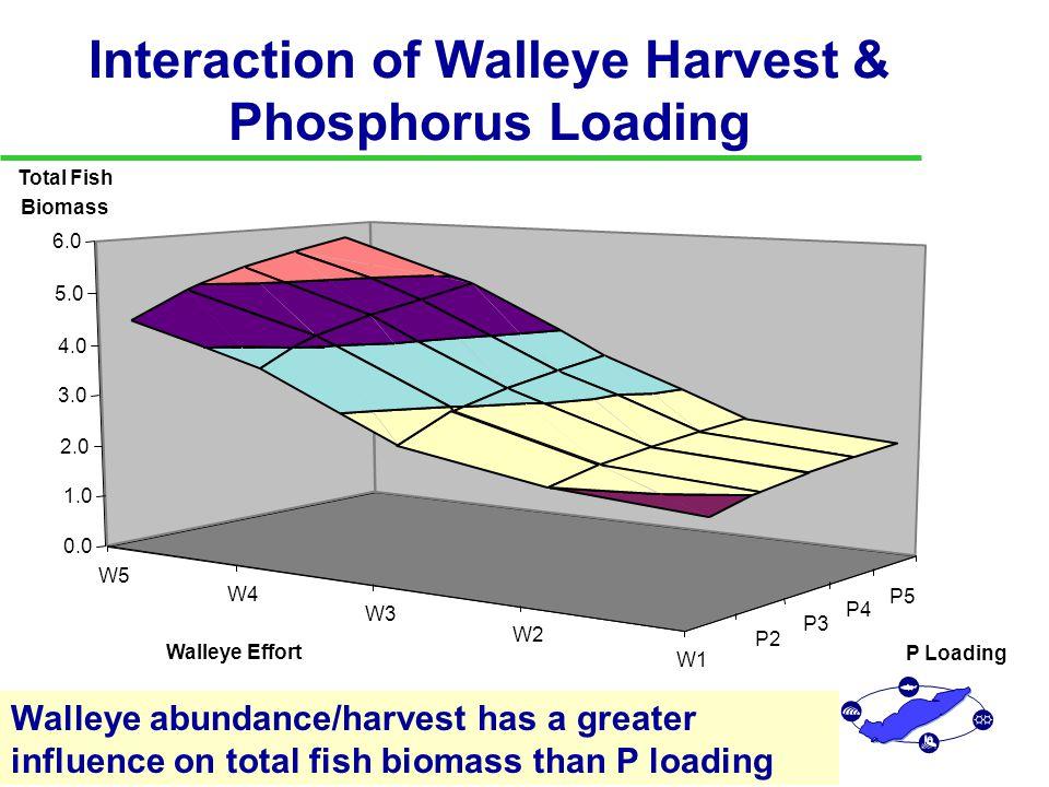 Implications of LEEM Studies u Fisheries and P Loading Jointly Determine Optimal Exploitation of Species