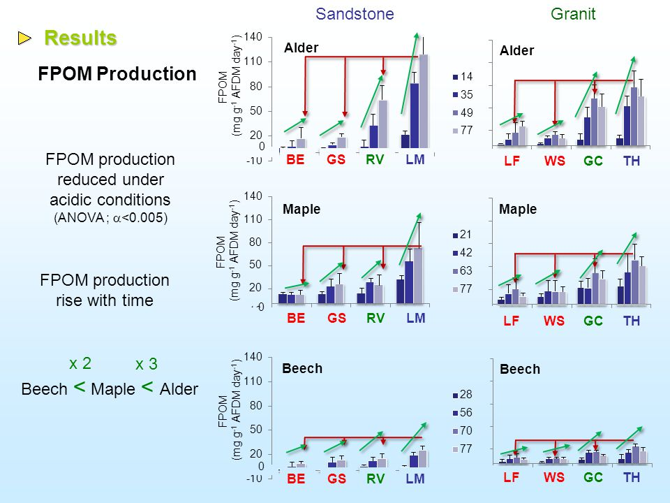Results Leaf disks consumption Alder SandstoneGranit Daily consumption (mg AFDM g -1 day -1 ) Maple Daily consumption (mg AFDM g -1 day -1 ) Beech Daily consumption (mg AFDM g -1 day -1 ) Litter consumption reduced under acidic conditions (ANOVA ;  <0.005) Leaf disk consumption rise with time Alder > Maple > Beech BEGSRVLM LFWSGCTH BEGSRVLM LFWSGCTH BEGS RV LM LFWSGCTH
