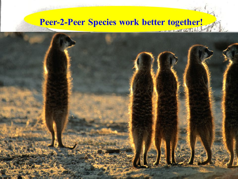 From Client / Server Model to  Server Client Peer-2-Peer Species work better together!