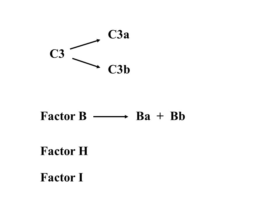 IV.Summary of Complement Pathways 3 pathways for activation: 1.