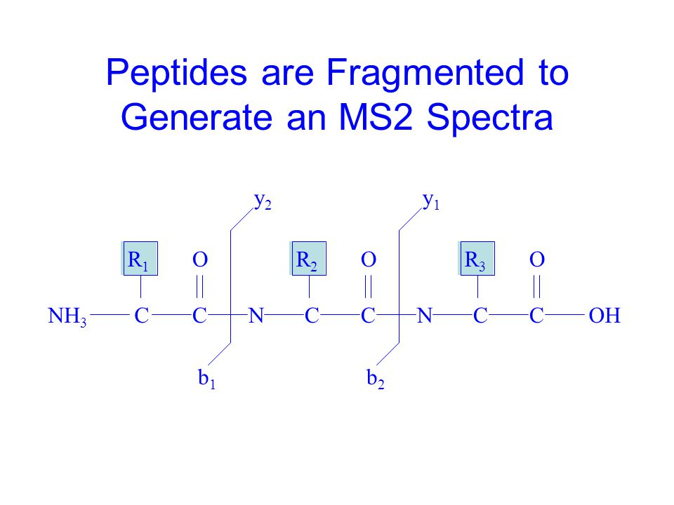 MS/MS Spectra Provide Protein Identification