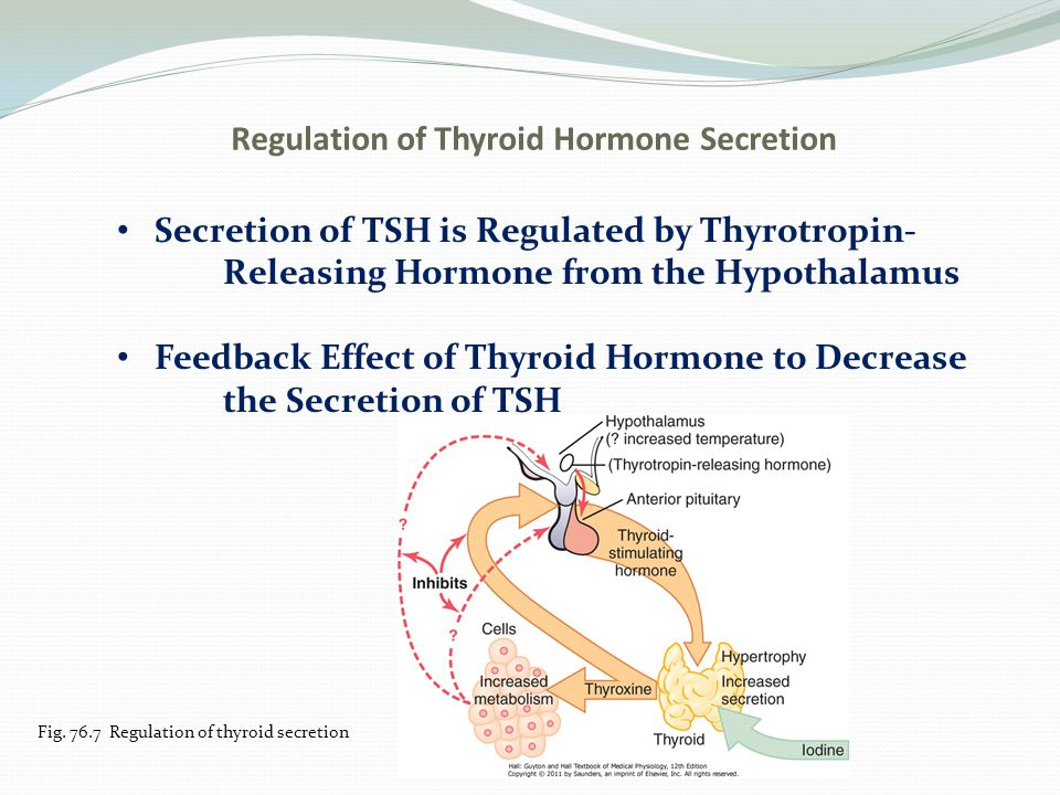 Regulation of Thyroid Hormone Secretion Diseases of the Thyroid a.Hyperthyroidism-Grave's Disease, toxic goiter b.Symptoms of hyperthyroidism 1)High state of excitability 2)Intolerance to heat 3)Mild to extreme weight loss 4)Varying degrees of diarrhea 5)Muscle weakness 6)Extreme fatigue 7)Tremor of the hands 8)Exophthalmos