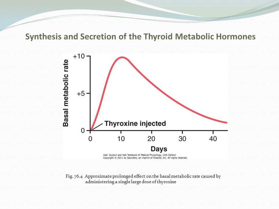 Physiological Functions of the Thyroid Hormones Thyroid Hormones Increase the Transcription of Large Numbers of Genes a.Most of the thyroxine secreted by the thyroid is converted to triiodothyronine (T3) b.Thyroid hormones activate nuclear receptors