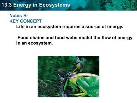 13.3 Energy in Ecosystems Notes R- KEY CONCEPT Life in an ecosystem requires a source of energy. Food chains and food webs model the flow of energy in.