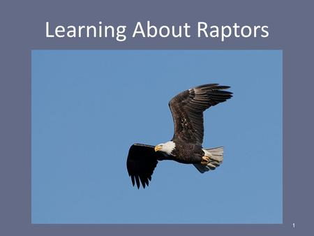 Learning About Raptors 1. The world's first raptor refuge 2.